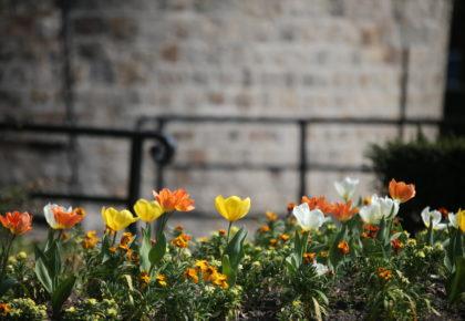 DOUAI: La ville organise une journée verte à la maison.