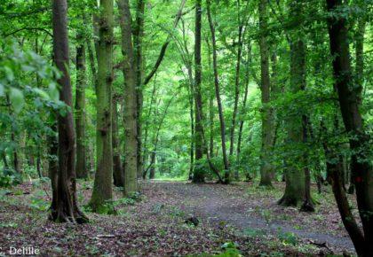 DOUAISIS : Espaces naturels du Nord, les sites du Douaisis ont rouvert leurs portes depuis le 16 Mai.