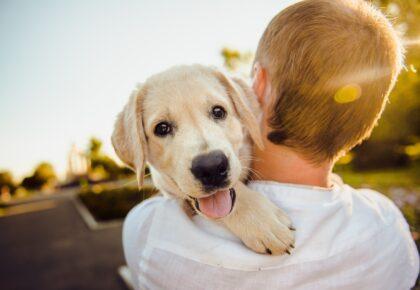 DOUAI : La Ville de Douai offre un cours d'éducation canine